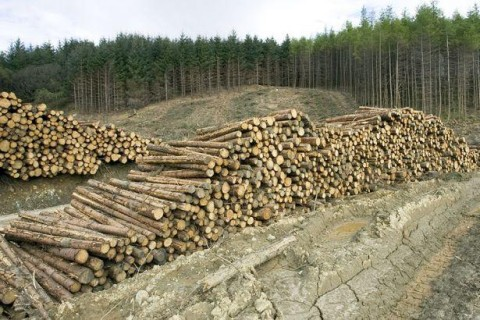 ГФС: Из Украины за год вывезли более миллиона тонн леса