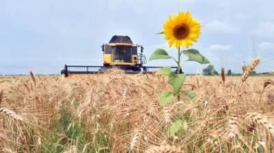Урожай зерновых в Украине снизился