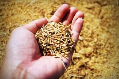 Экспорт украинского зерна сократился впервые за 5 лет
