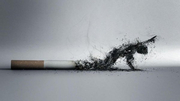 В России решили вывести табак из легального оборота