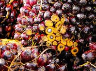 Малайзийский совет производителей пальмового масла просит депутатов Госдумы РФ