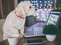 В России появляется все больше pet friendly офисов: около 60% опрошенных не против собак и кошек на работе